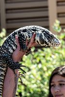07-20 Gila Monster--8