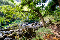 Iao Valley State Park-6